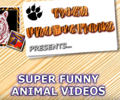 Crazy & Funny ANIMAL videos – LAUGH and ENTERTAINMENT for EVERYONE